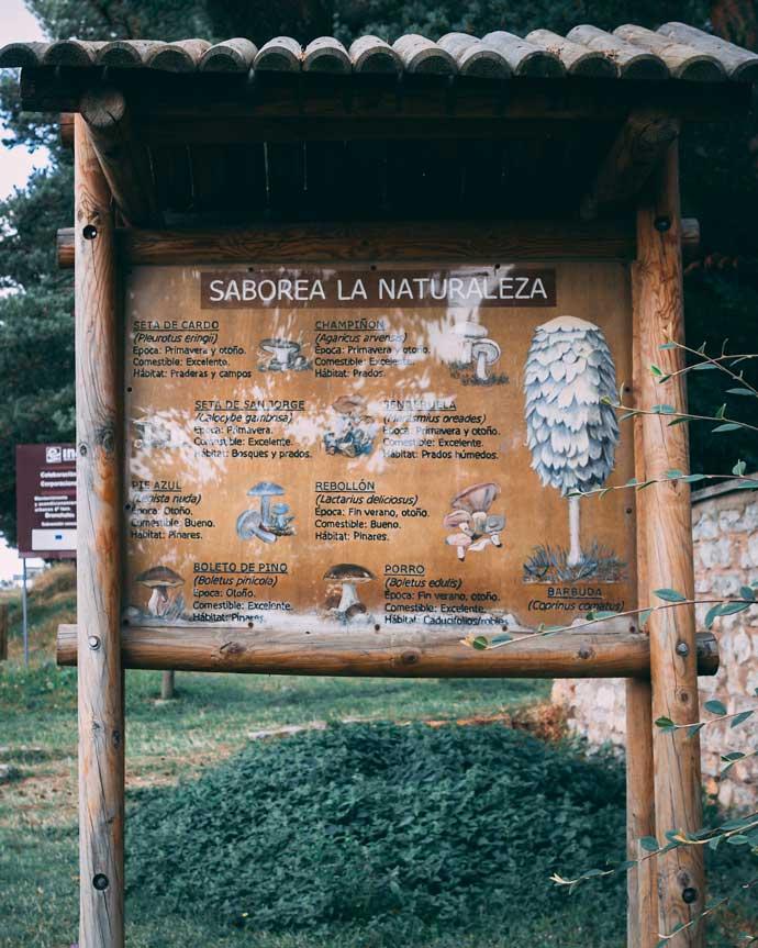 Foto de un cartel informativo sobre las setas en Bronchales