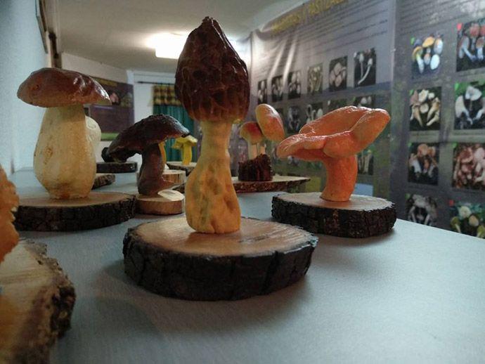 Fotografía del interior del museo de setas de Bronchales
