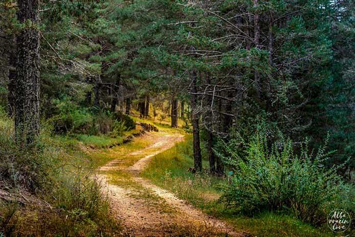 Fotografía de un camino en medio de la naturaleza