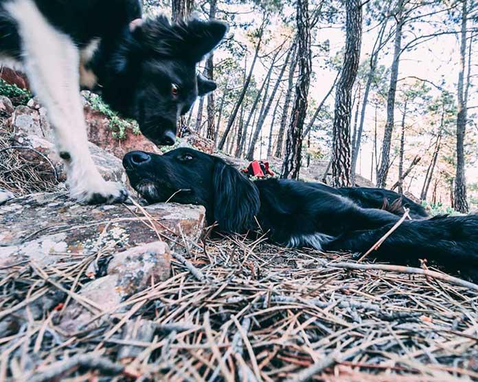 Fotografia de planes con perros en el campo y la naturaleza